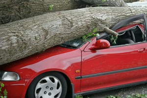 auto accident - tree fallen on car